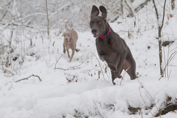 Heidi & Bella - Snow 29DEC2012-11